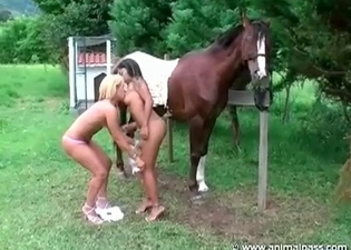 Stallion is satisfying two a wild models